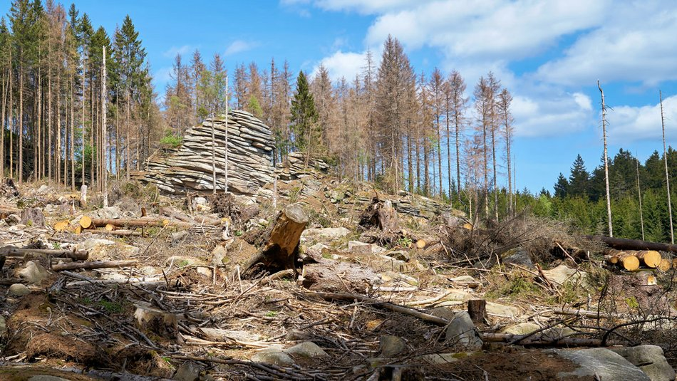 Lectures for Future Scientists for Future Abgestorbener Wald Klimawandel